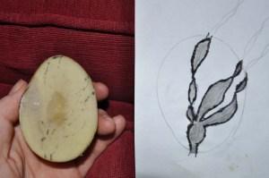 potato_seaweed_drawing